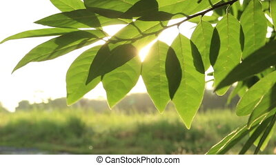 Rays Of The Sun Through The Leaves Of Trees