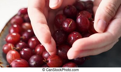 Close up rotating shot of red gooseberry harvest. Healthy ...