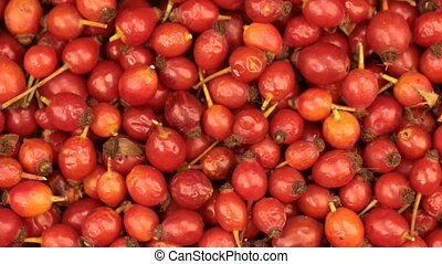 Close-up. Rotation of freshly harvested rosehips berries .
