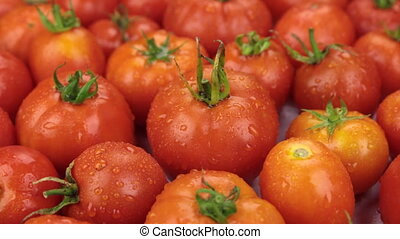 Close-up. Rotation of natural ripe red tomatoes in drops of dew. Food