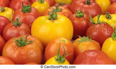 Close-up. Rotation of natural ripe yellow tomatoes in drops of dew. Food