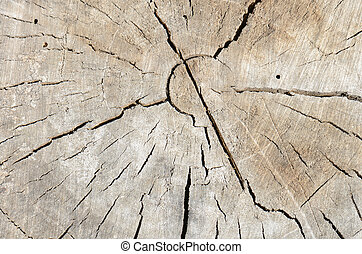 close up rough old wood texture background