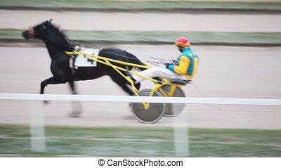 running horse in cart, operated jockey, on hippodrome -...