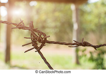 Close up rusty barbed wire with sunlight.