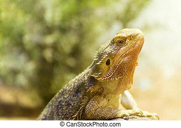 the lizard - close up scene of the lizard