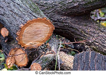 Close up several felled tree trunks on ground - Piled cut...