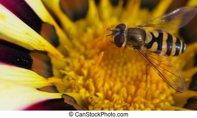 shaken flower and bee sitting in its - close up shaken...