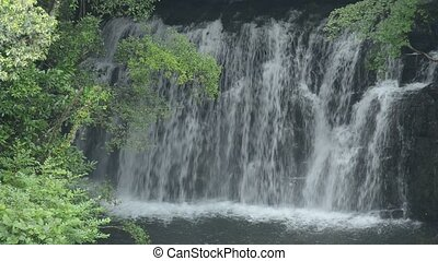 Close up shallow waterfall in back of fresh green tree ...