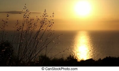 Close-up shoots, sea view from the hill, sunset sun...