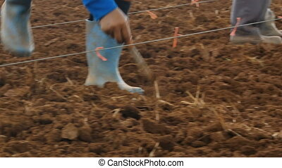 Close up shot farmer planting corn on dry country ground in...
