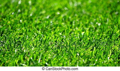 Close-up shot fresh spring green grass with water drops