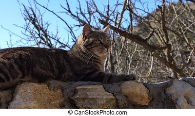 close-up shot of a beautiful gray striped cat basking in the sun while lying on the stairs in the park, waking up and yawning