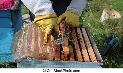 Close up shot of a beehive being opened with a metallic tool...
