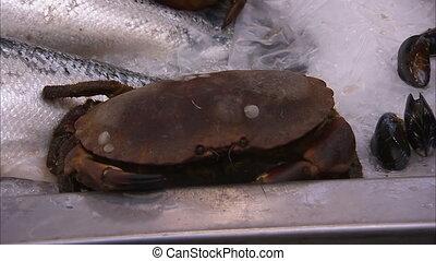 Close up shot of a dead crab