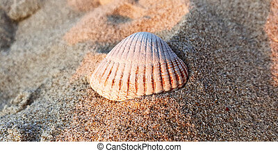 Close up shot of a white seashell on the beach