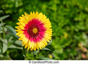 Close up shot of a yellow flower with red center
