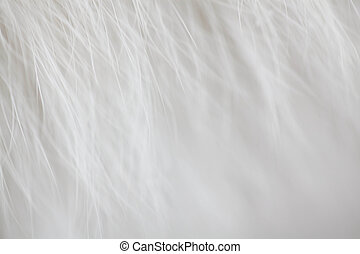 close up shot of abstract white fur