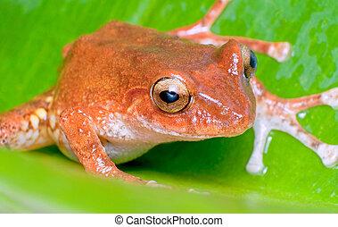 close up shot of an orange frog