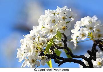 Close up shot of apple blossom
