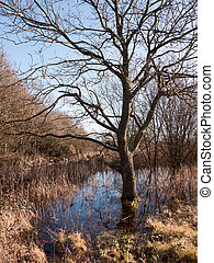 close up shot of bark bare tree in pool of water grass reeds around scene