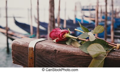 Close-up shot of beautiful single red rose lying on Venice...
