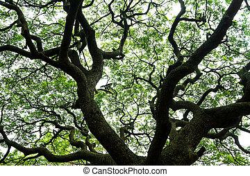 Close up shot of big old tree