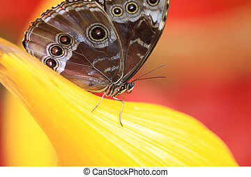 Close up shot of butterfly