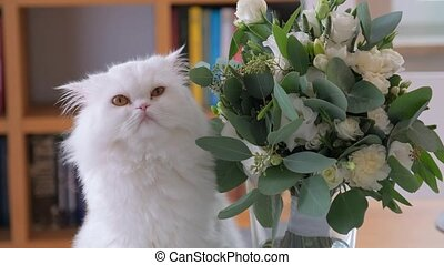 Close-up shot of Cat is sniffing a bouquet and looking around.
