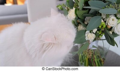 Close-up shot of Cute white cat is sniffing flowers.