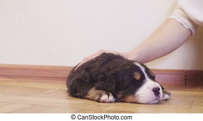 Female hand stroking a puppy sleeping on the floor