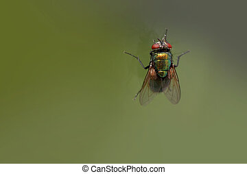 house fly on a window glass