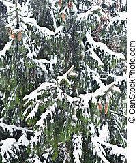 pine tree - close up shot of pine tree with snow