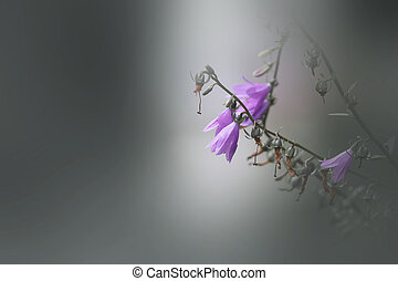 close up shot of purple flowers with shallow depth of field