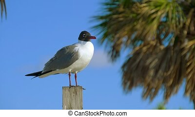Close up shot of seagull resting on a harbour pole - Seagull...