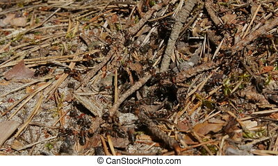Close-up shot of small ants .