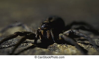 Close up shot of spider's fangs and eyes - A close up of...