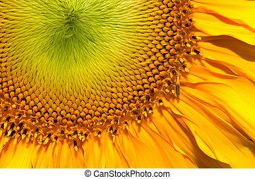 Close up shot of Sun flower seeds background