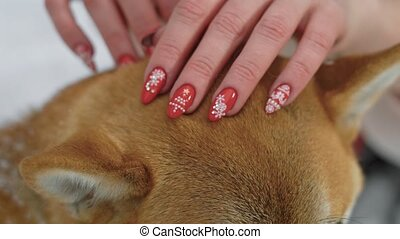close up shot of the hands of a woman, who iron a dog's hair, a lady made a manicure with snowflakes