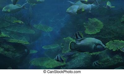 Close up shot of tropical fishes and corals in aquarium. Siam Ocean World, Bangkok, Thailand