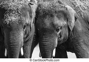 Close up shot of two elephants