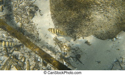 Close up shot of two fish on the seafloor
