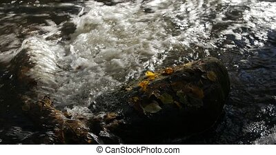 Close-up shot of water streams in a mountain creek with...
