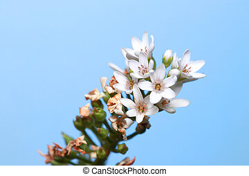 white tiny flowers against blue sky background