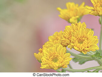 Close-up shot of yellow flower in nature. Garden and Backyard.