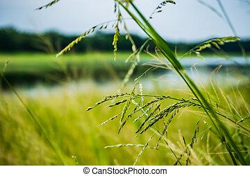 Close up shot with selective focus Grass