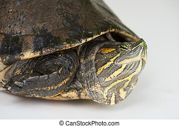 Close up side view on turtle