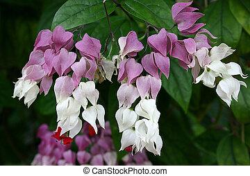 close-up, sino flor, imagem, flor cheia