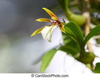 close up small orchid in wild