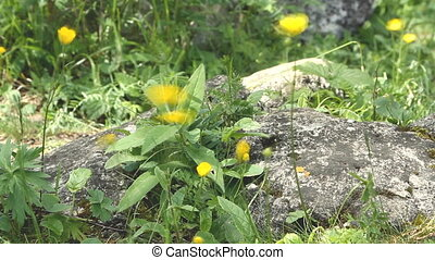 Close up small yellow wild flower