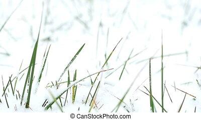 Close up snow grass